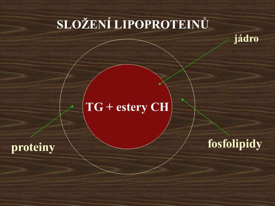 SLOŽENÍ LIPOPROTEINŮ TG + estery CH proteiny fosfolipidy