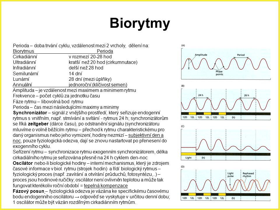 Biorytmy Perioda – doba trvání cyklu, vzdálenost mezi 2 vrcholy, dělení na: Biorytmus Perioda. Cirkadiánní v rozmezí 20-28 hod.