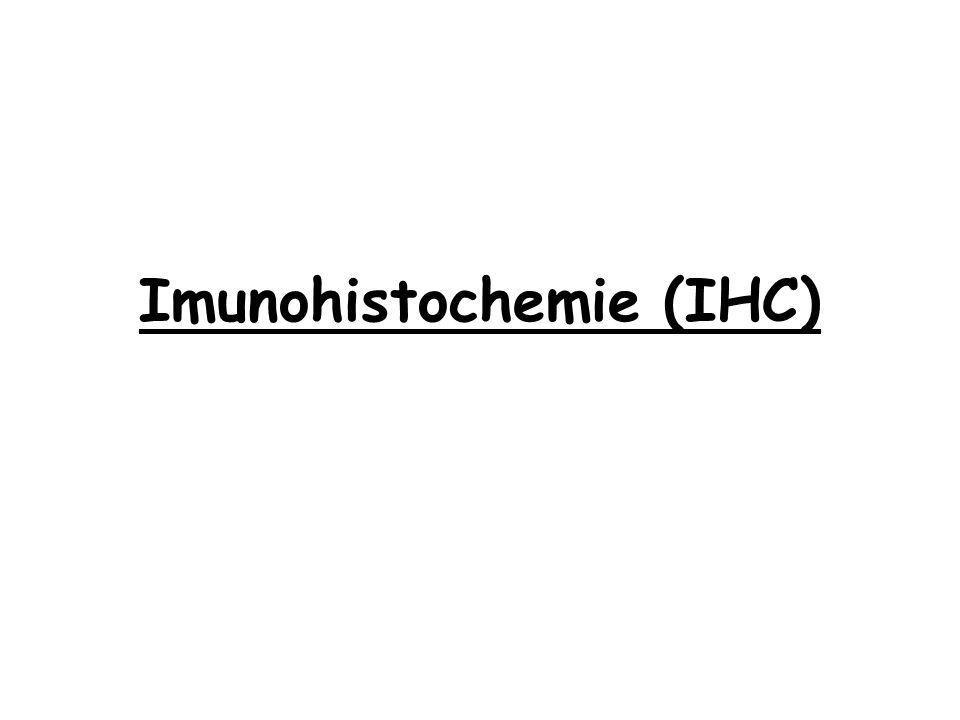 Imunohistochemie (IHC)