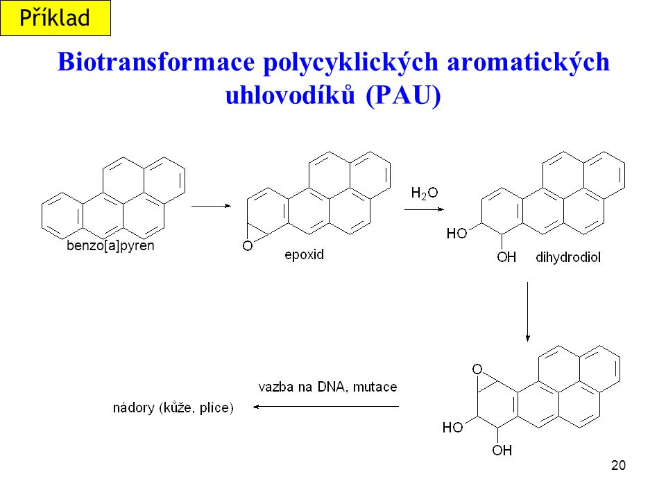Biotransformace polycyklických aromatických uhlovodíků (PAU)
