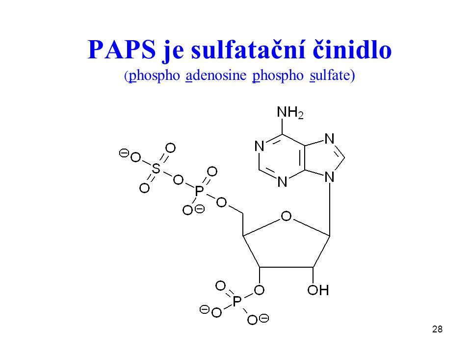 PAPS je sulfatační činidlo (phospho adenosine phospho sulfate)