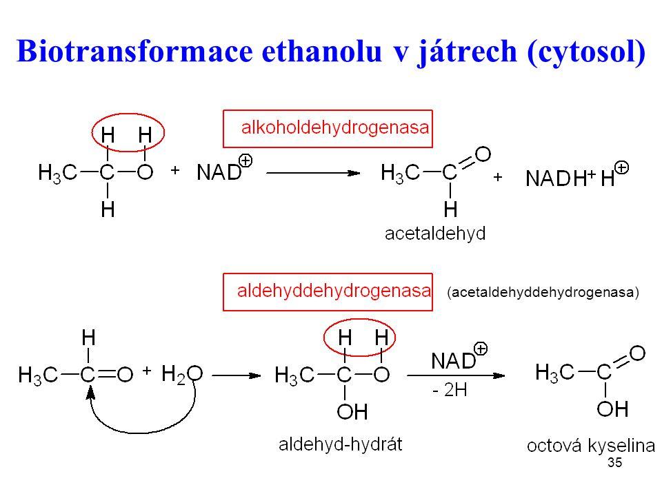 Biotransformace ethanolu v játrech (cytosol)