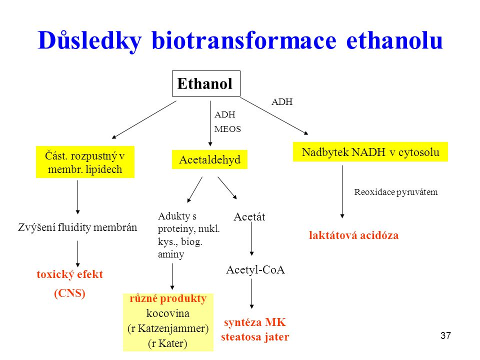 Důsledky biotransformace ethanolu