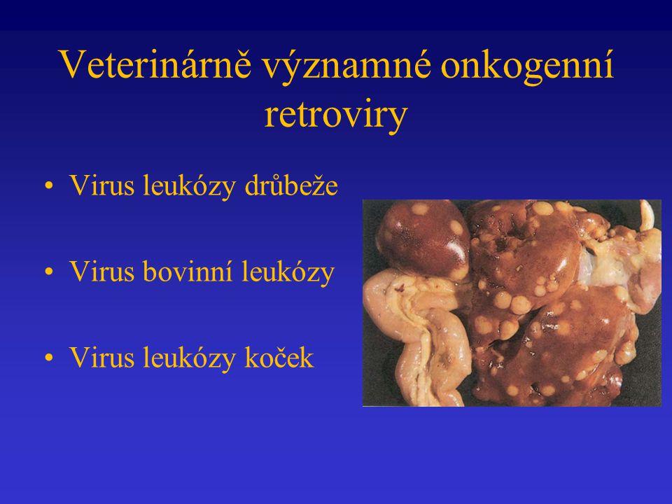 Veterinárně významné onkogenní retroviry