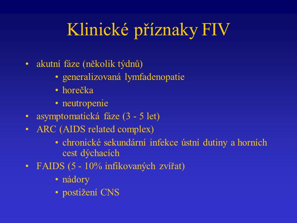 Klinické příznaky FIV akutní fáze (několik týdnů)