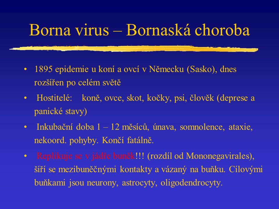 Borna virus – Bornaská choroba