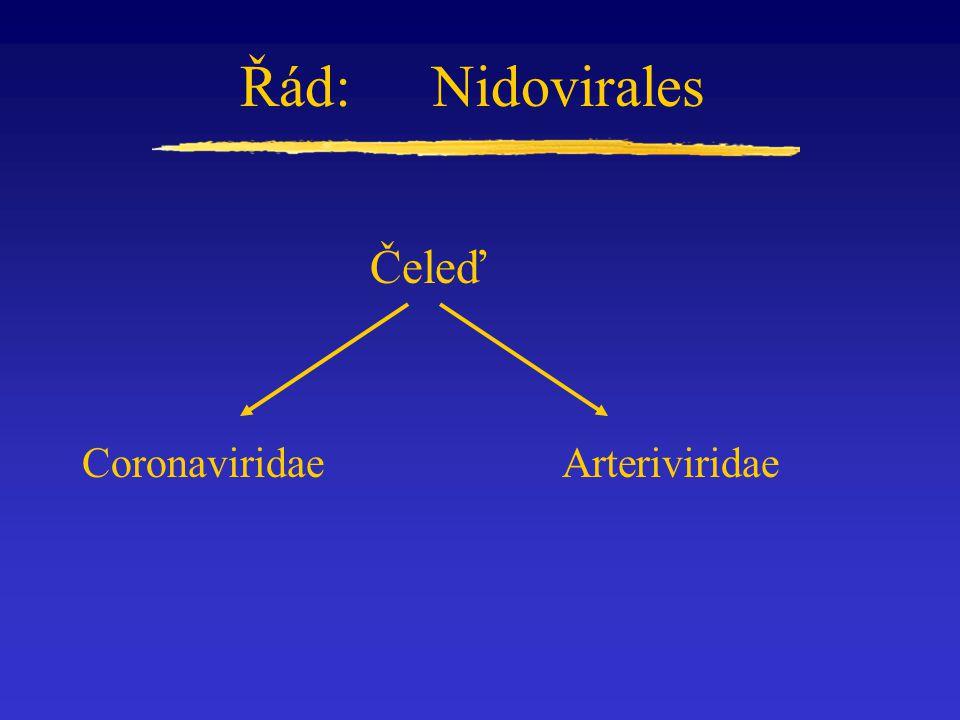 Řád: Nidovirales Čeleď Coronaviridae Arteriviridae