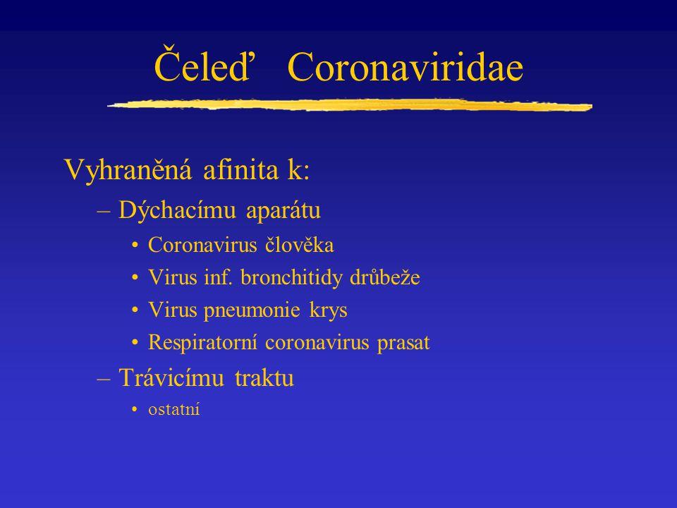 Čeleď Coronaviridae Vyhraněná afinita k: Dýchacímu aparátu