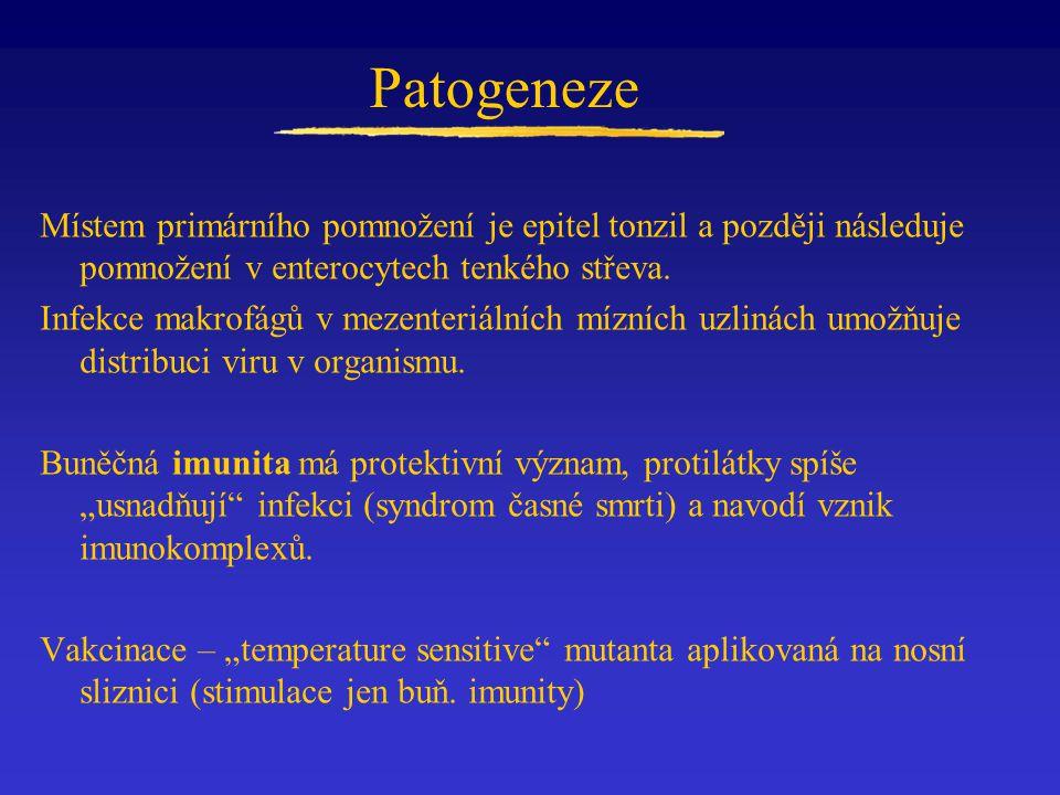 Patogeneze Místem primárního pomnožení je epitel tonzil a později následuje pomnožení v enterocytech tenkého střeva.