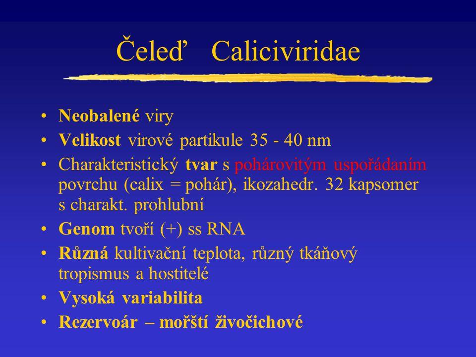 Čeleď Caliciviridae Neobalené viry
