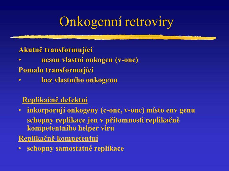 Onkogenní retroviry Akutně transformující