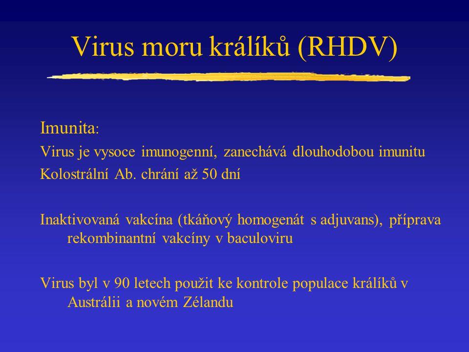 Virus moru králíků (RHDV)