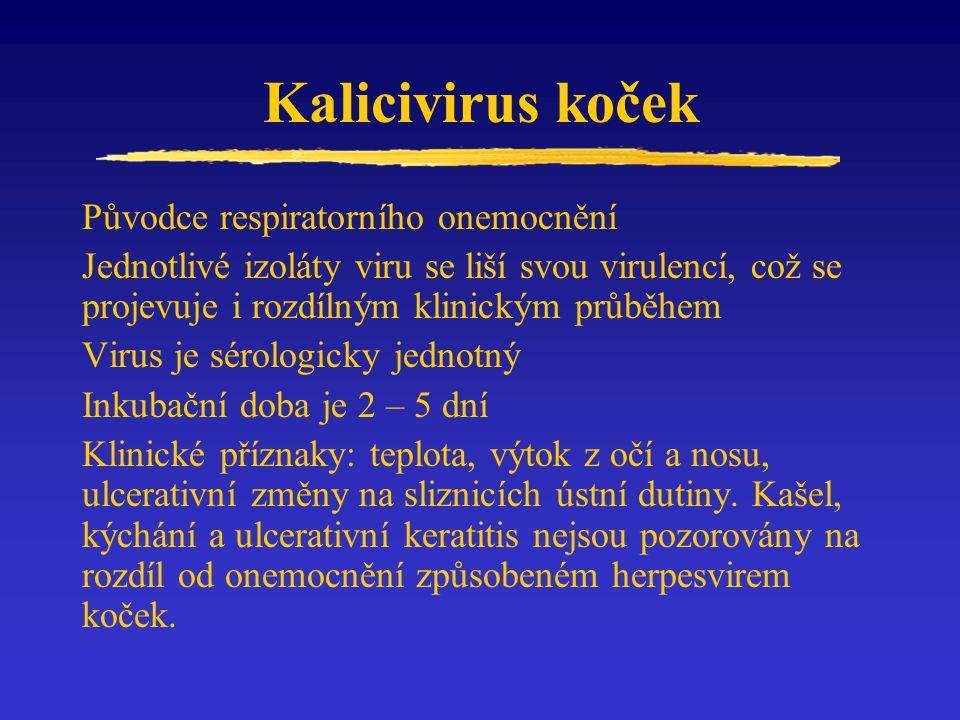 Kalicivirus koček Původce respiratorního onemocnění