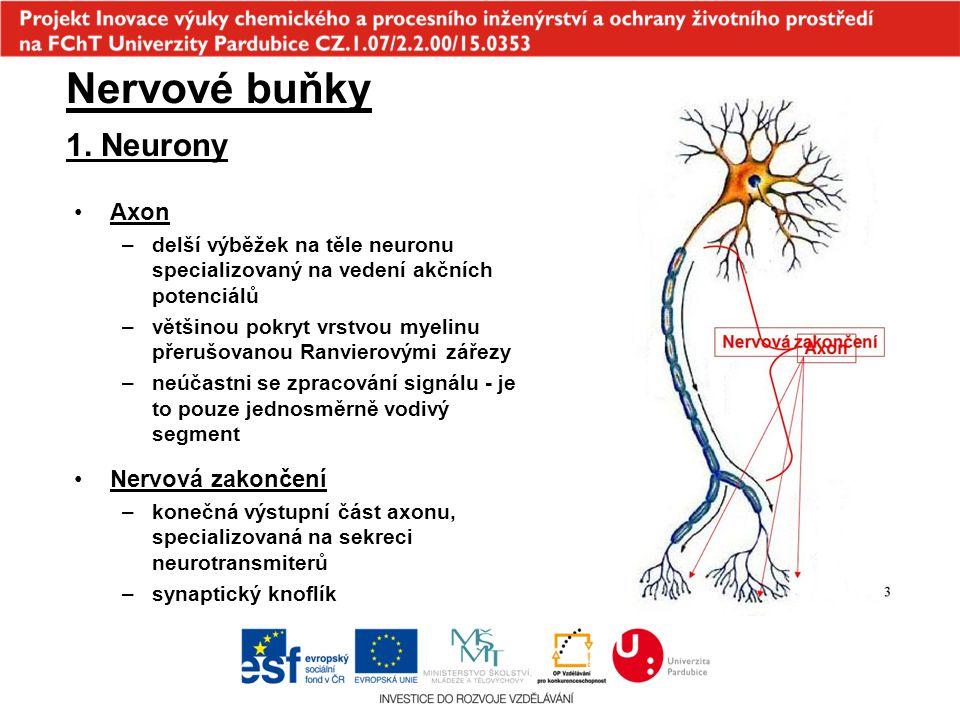 Nervové buňky 1. Neurony Axon Nervová zakončení