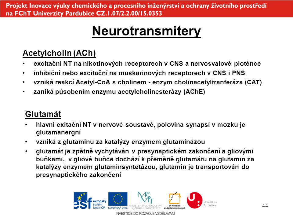 Neurotransmitery Acetylcholin (ACh) Glutamát