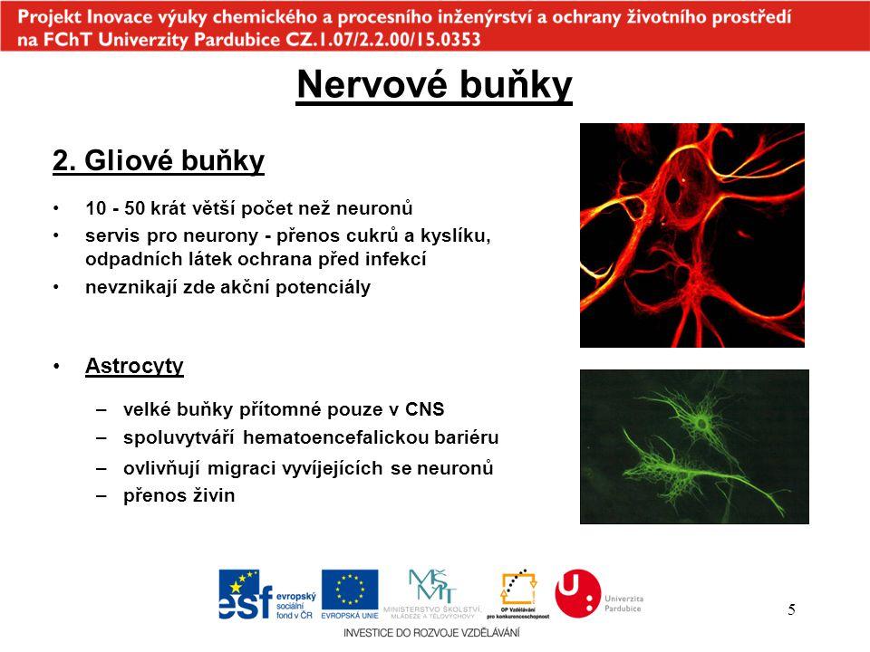 Nervové buňky 2. Gliové buňky Astrocyty