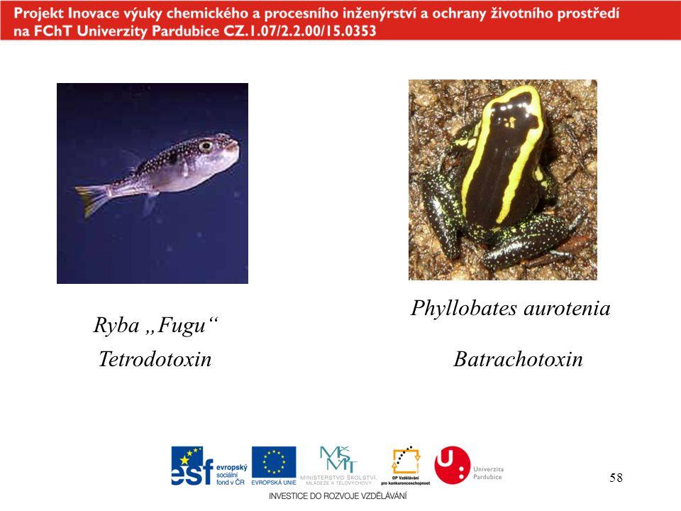 Phyllobates aurotenia