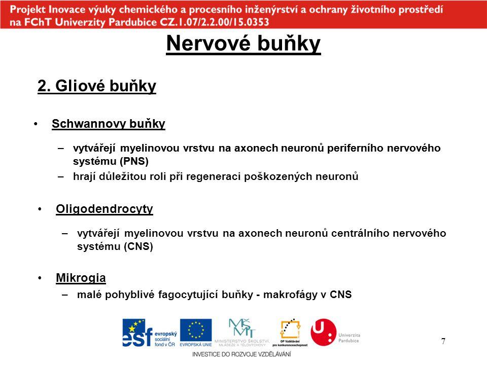 Nervové buňky 2. Gliové buňky Schwannovy buňky Schwannovy buňky