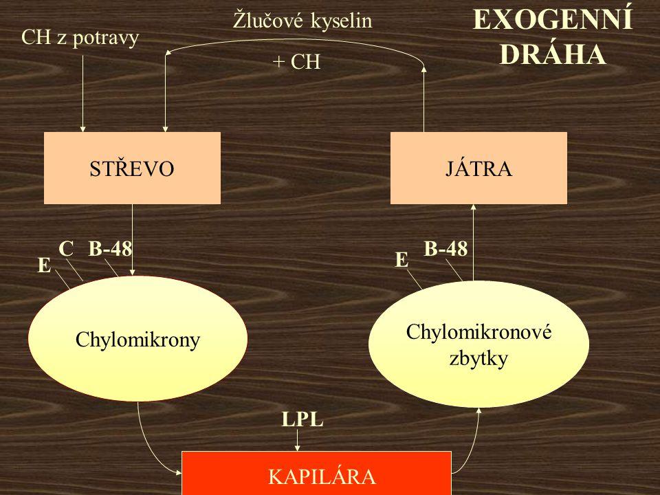 EXOGENNÍ DRÁHA Žlučové kyselin CH z potravy + CH STŘEVO JÁTRA C B-48