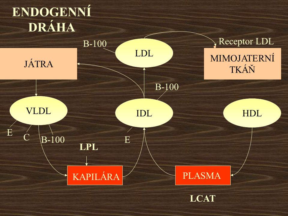 ENDOGENNÍ DRÁHA Receptor LDL B-100 LDL JÁTRA MIMOJATERNÍ TKÁŇ B-100