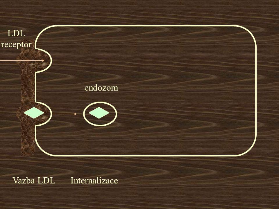 LDL receptor endozom Vazba LDL Internalizace