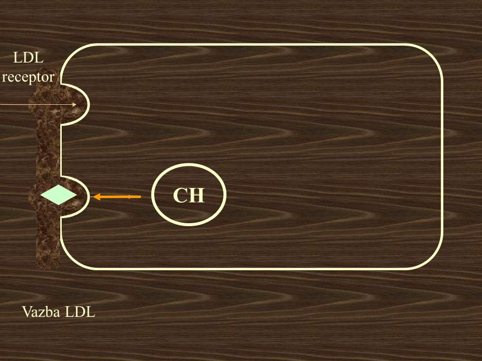 LDL receptor CH Vazba LDL