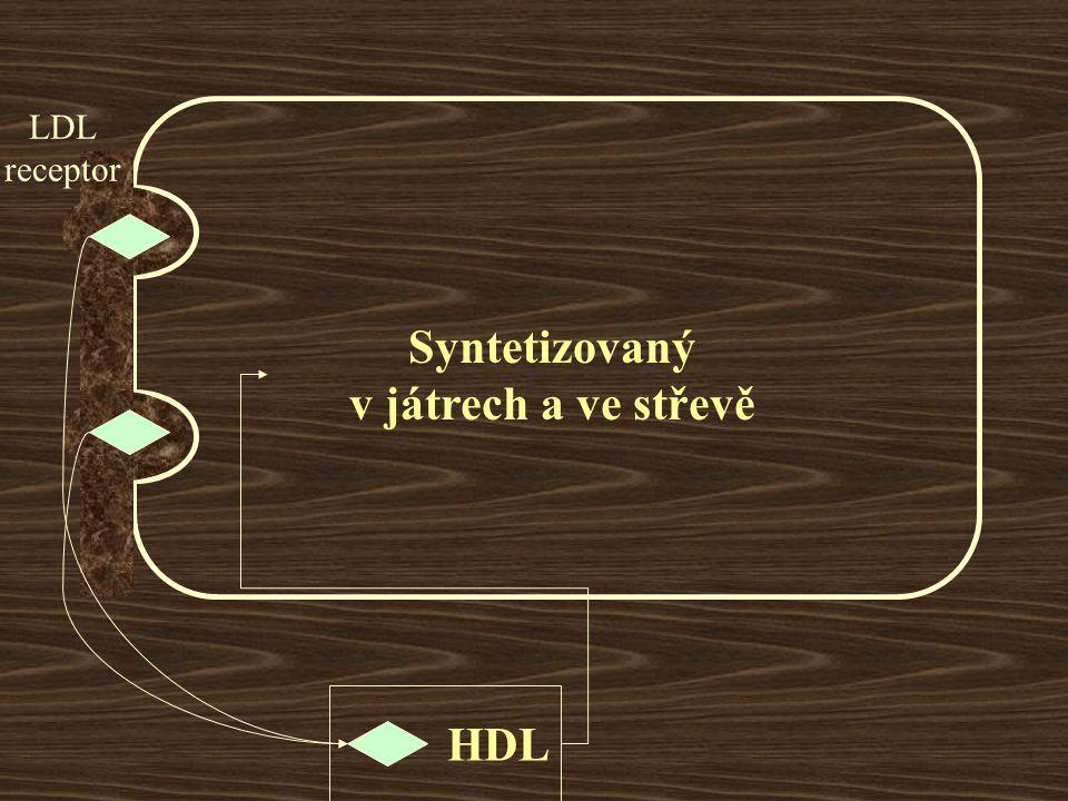 Syntetizovaný v játrech a ve střevě