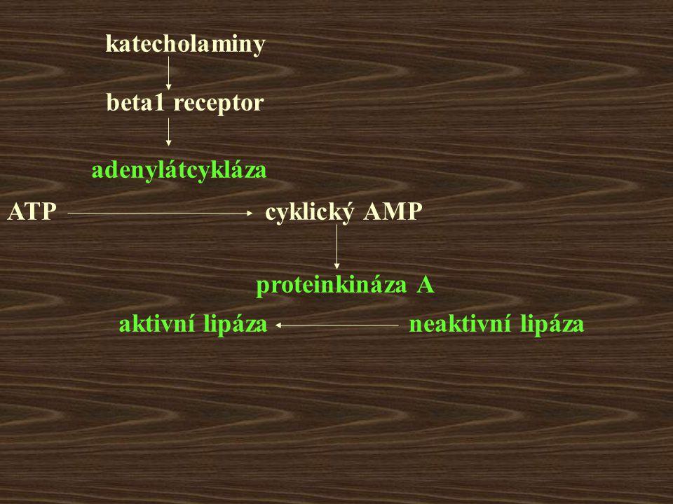 katecholaminy beta1 receptor. adenylátcykláza. ATP. cyklický AMP. proteinkináza A. aktivní lipáza.