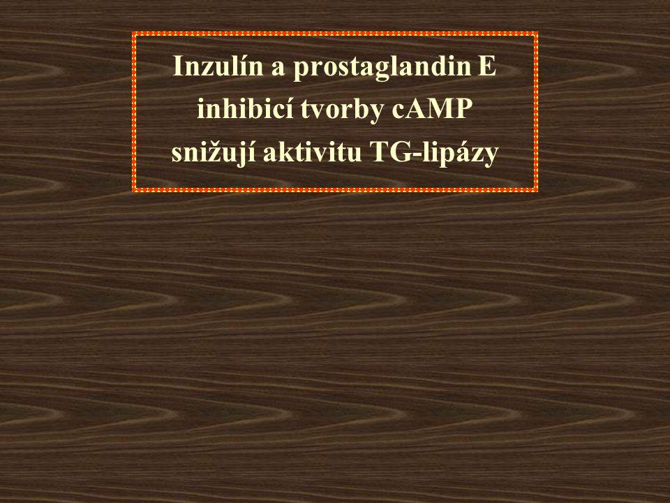 Inzulín a prostaglandin E snižují aktivitu TG-lipázy