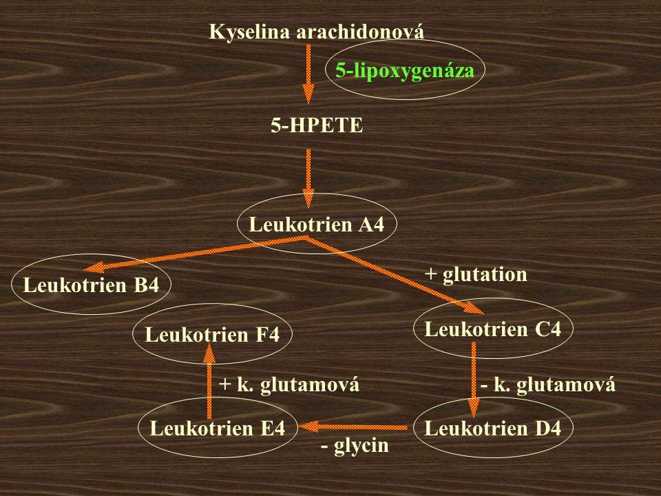 Kyselina arachidonová