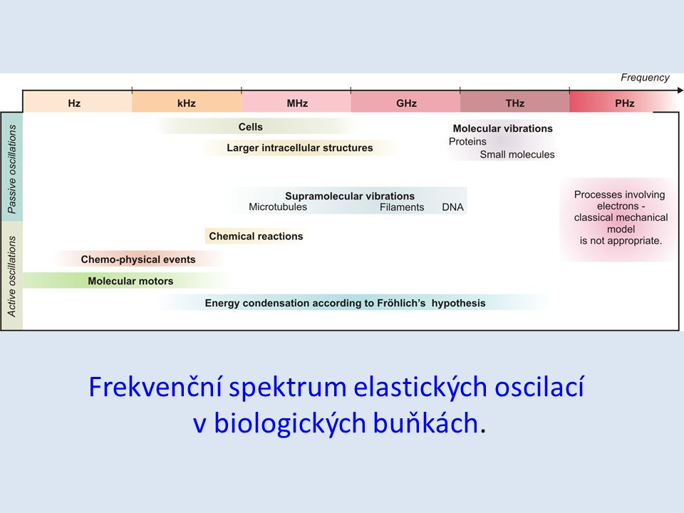 Frekvenční spektrum elastických oscilací v biologických buňkách.