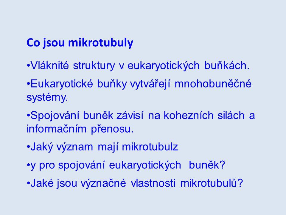 Co jsou mikrotubuly Vláknité struktury v eukaryotických buňkách.