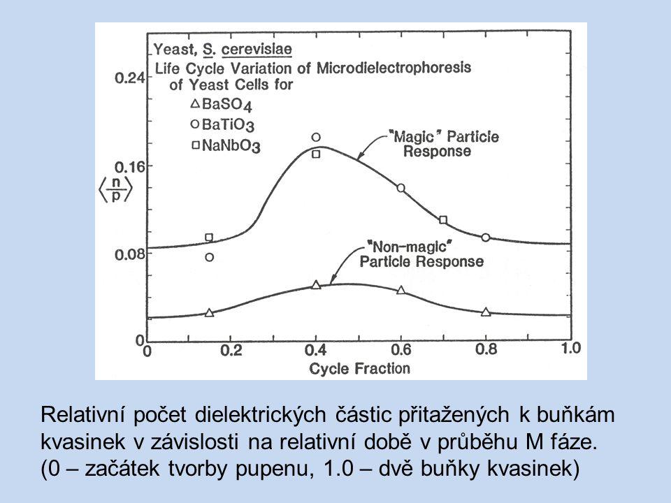 Relativní počet dielektrických částic přitažených k buňkám kvasinek v závislosti na relativní době v průběhu M fáze.