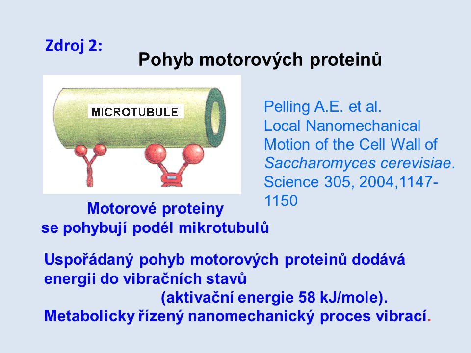 se pohybují podél mikrotubulů
