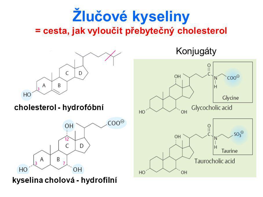 Žlučové kyseliny = cesta, jak vyloučit přebytečný cholesterol