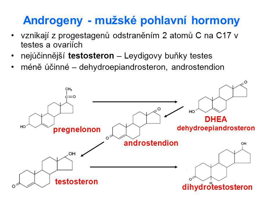 Androgeny - mužské pohlavní hormony
