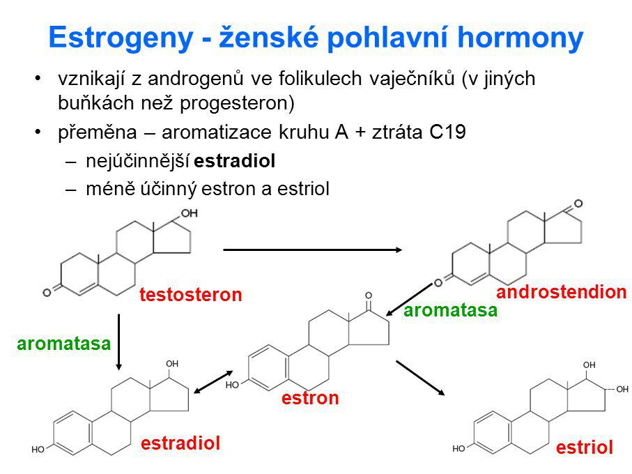 Estrogeny - ženské pohlavní hormony