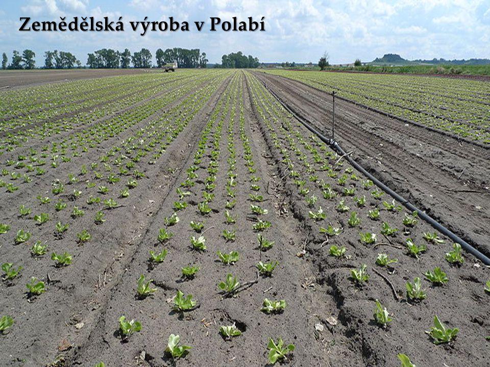 Zemědělská výroba v Polabí