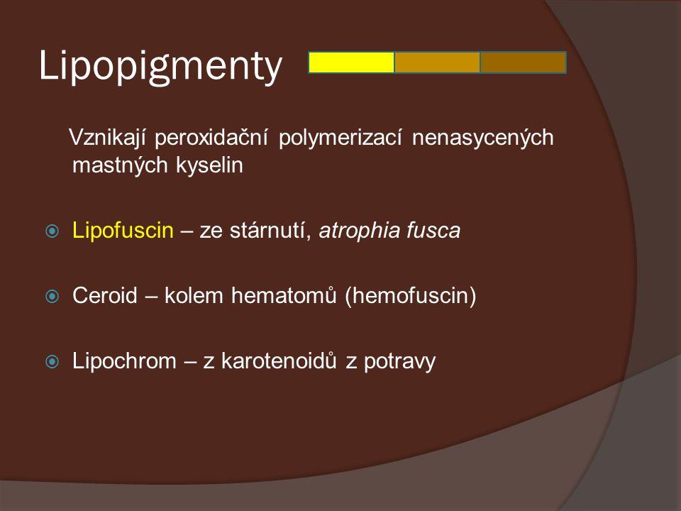 Lipopigmenty Vznikají peroxidační polymerizací nenasycených mastných kyselin. Lipofuscin – ze stárnutí, atrophia fusca.
