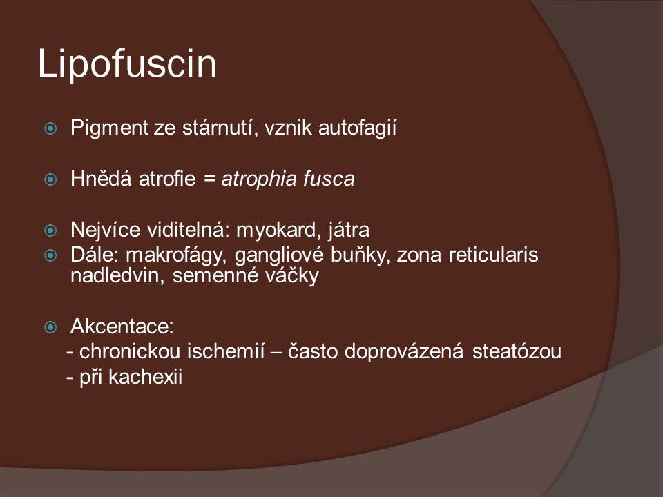 Lipofuscin Pigment ze stárnutí, vznik autofagií