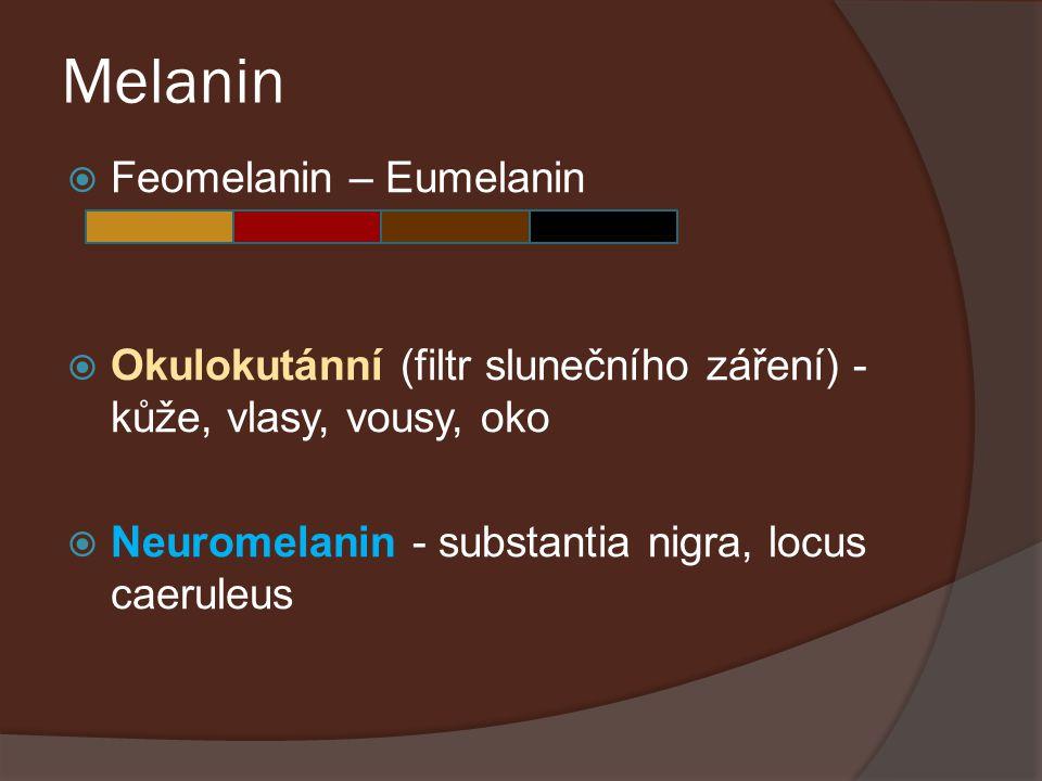 Melanin Feomelanin – Eumelanin