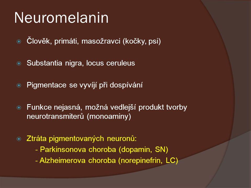 Neuromelanin Člověk, primáti, masožravci (kočky, psi)