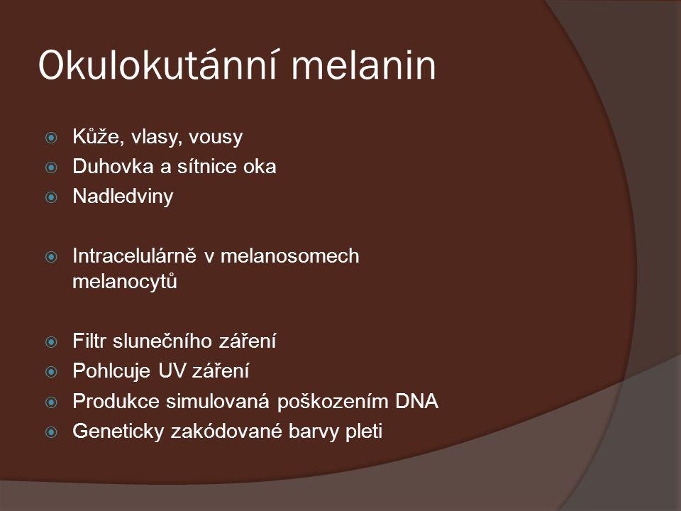 Okulokutánní melanin Kůže, vlasy, vousy Duhovka a sítnice oka