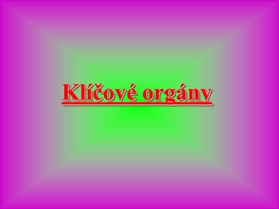 Klíčové orgány