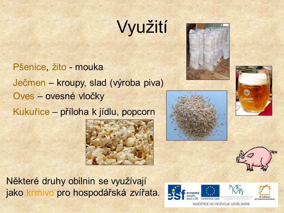 Využití Pšenice, žito - mouka Ječmen – kroupy, slad (výroba piva)