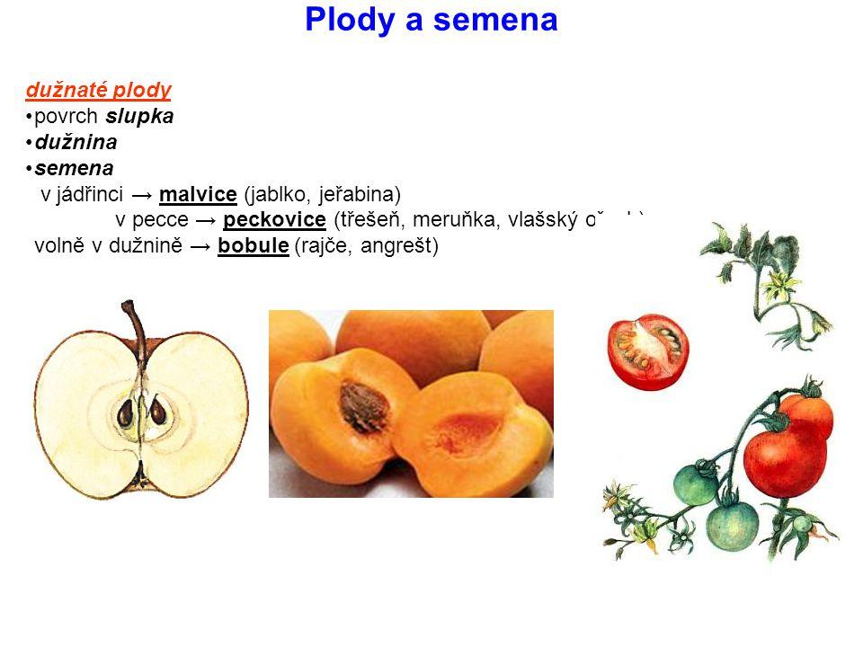 Plody a semena dužnaté plody povrch slupka dužnina semena