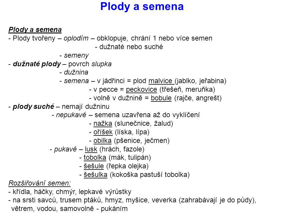 Plody a semena Plody a semena