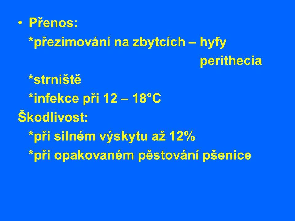 Přenos: *přezimování na zbytcích – hyfy. perithecia. *strniště. *infekce při 12 – 18°C. Škodlivost: