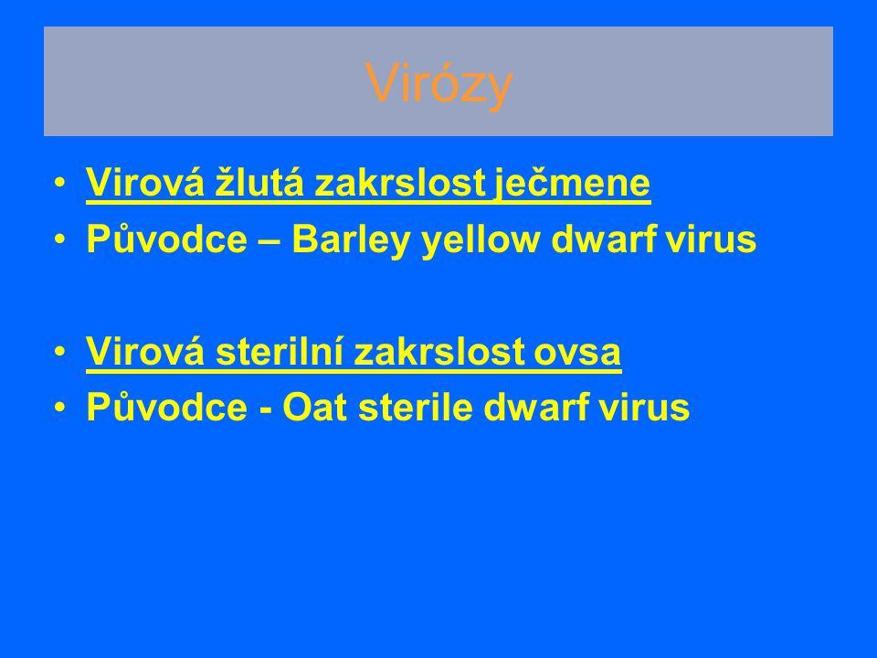Virózy Virová žlutá zakrslost ječmene