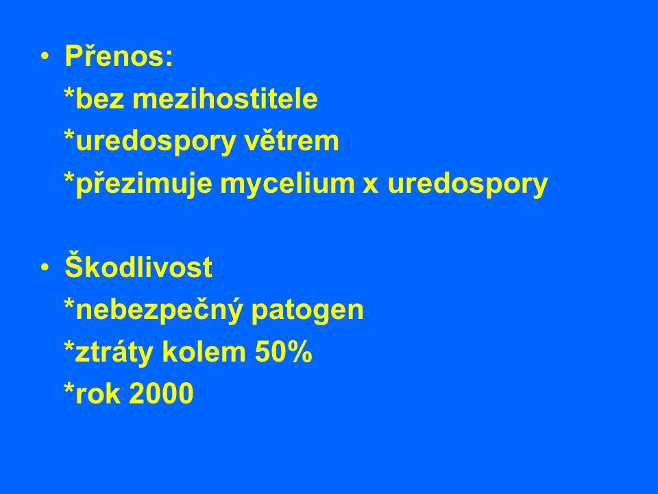 Přenos: *bez mezihostitele. *uredospory větrem. *přezimuje mycelium x uredospory. Škodlivost. *nebezpečný patogen.
